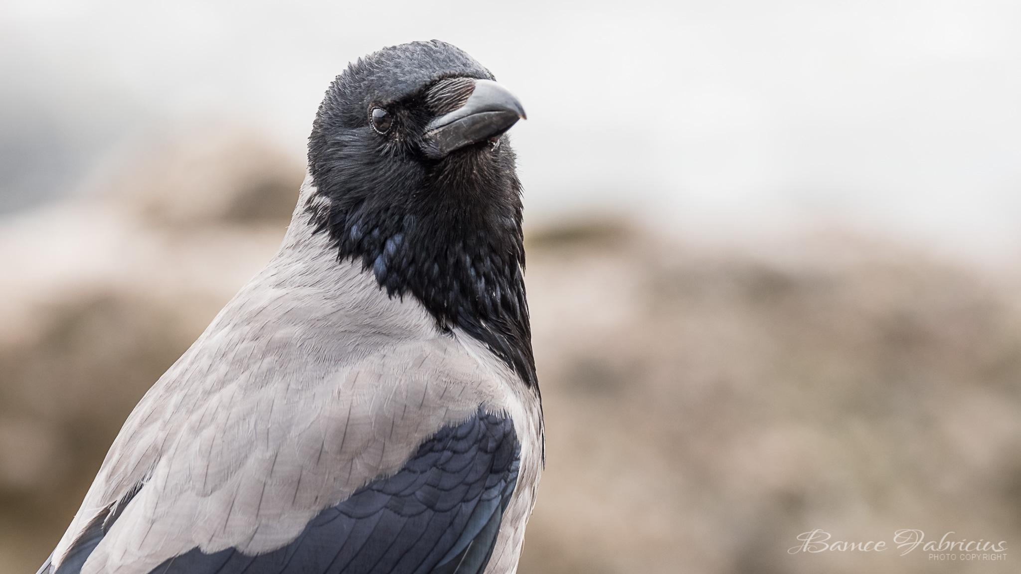 100 fågelarter